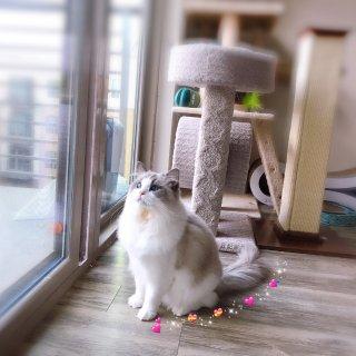 宠物博上线:单身狗携2只布偶猫🐱祝大家七...