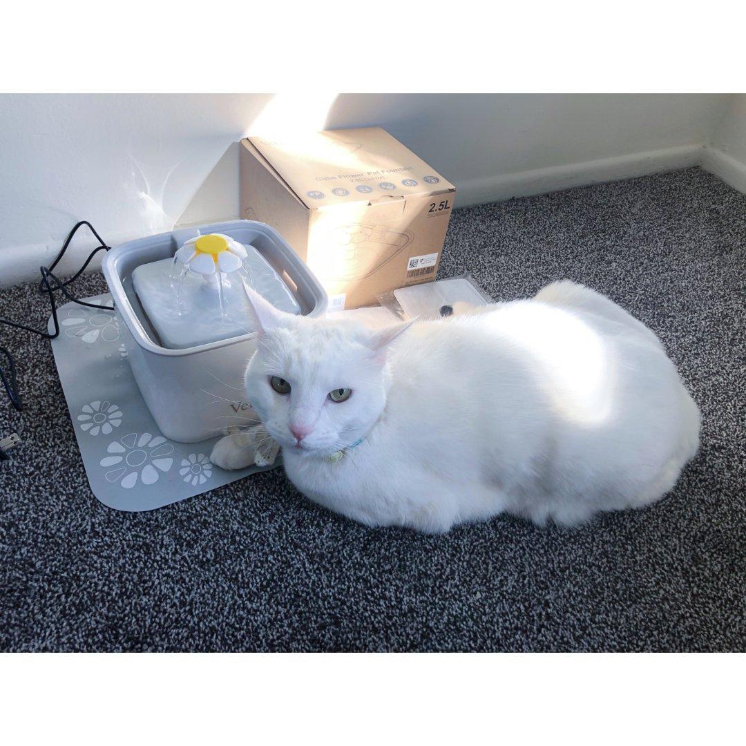 Veken貓水盆🌼