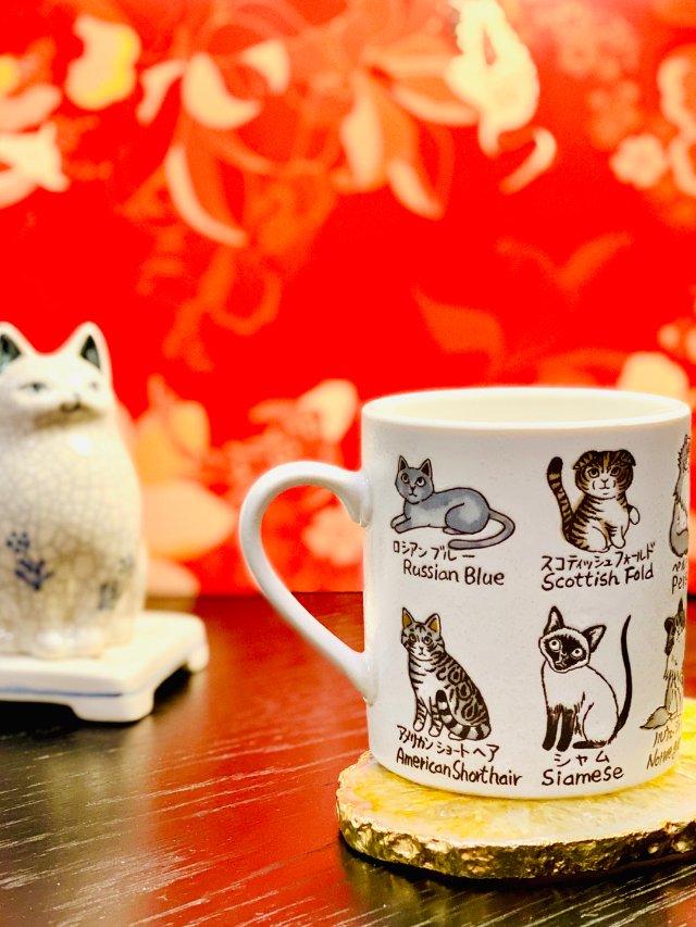 猫奴的专属小杯杯