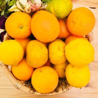 水果蔬菜清洁剂veggie wash...
