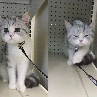 我有一只小花猫 她叫kimchi...