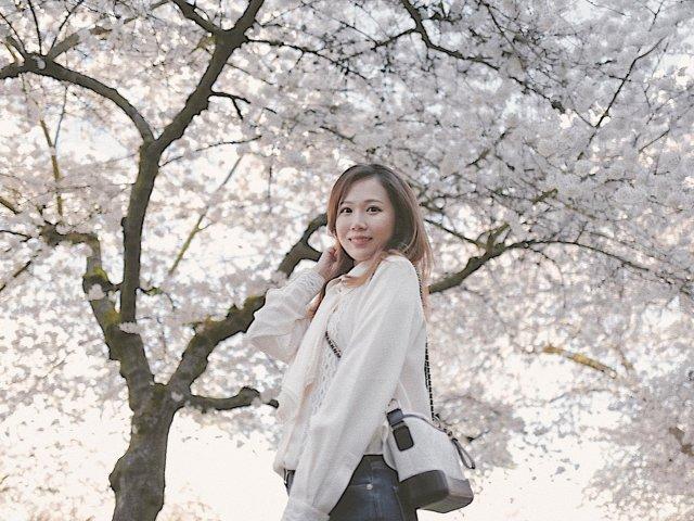 樱花季 | 西雅图华大樱花🌸