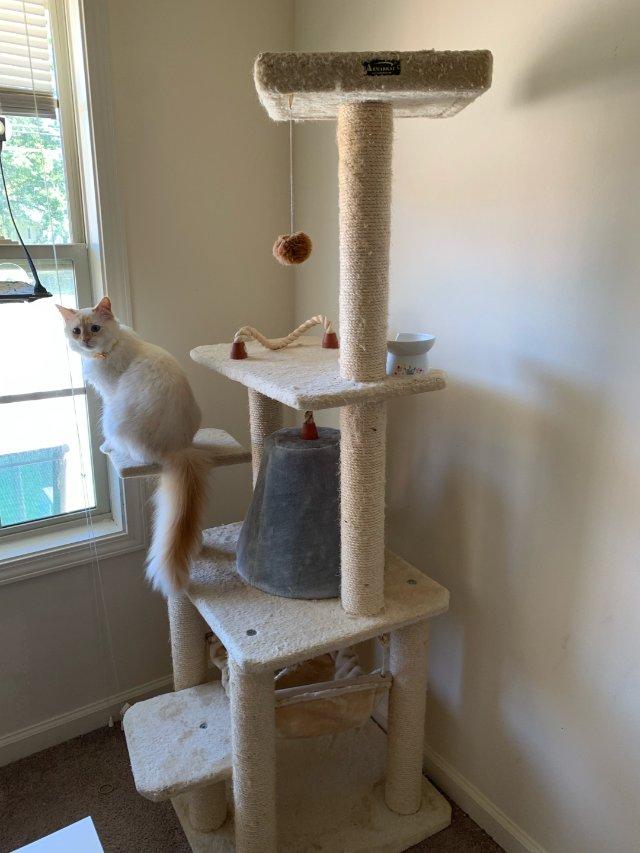 如何选择猫爬架?🤔😺