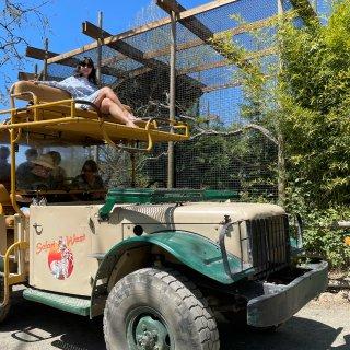 湾区玩乐 坐在越野车顶游野生动物园...