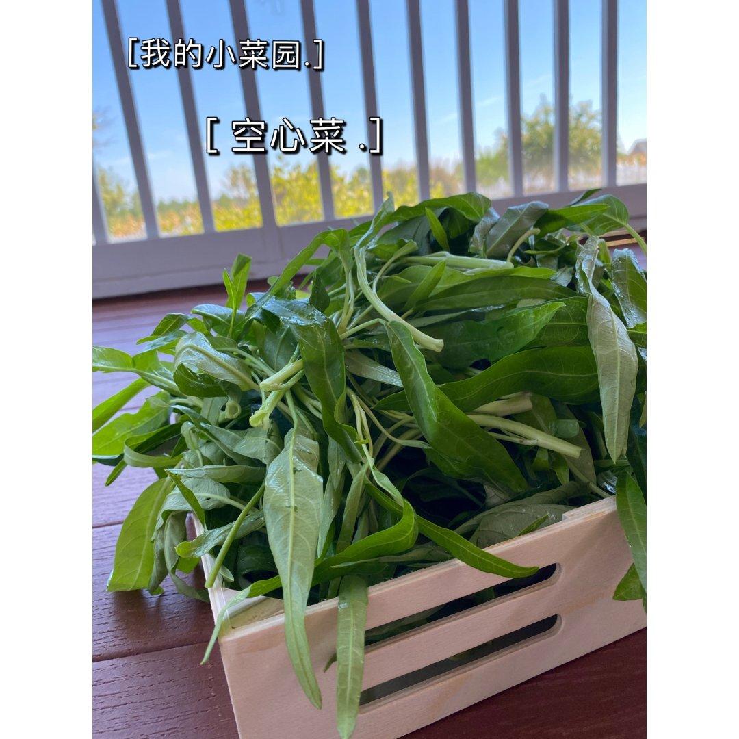 我的小菜园:空心菜