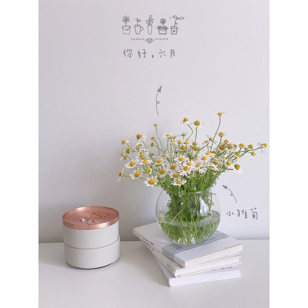 𝓓𝓪𝓲𝓼𝔂 充满夏日气息的小雏菊