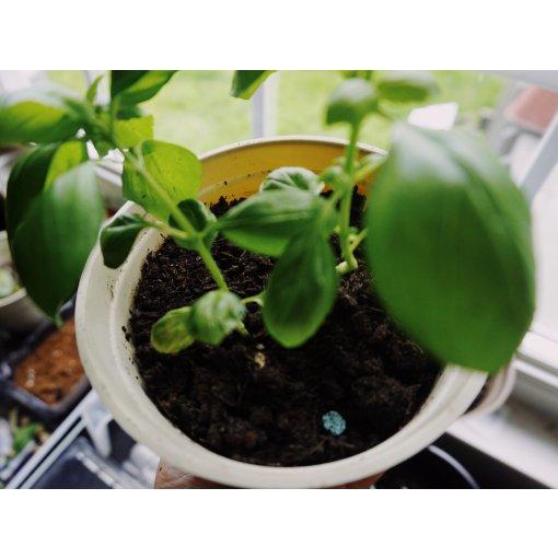 种植神器| 新手也能养比nursery还壮的植物
