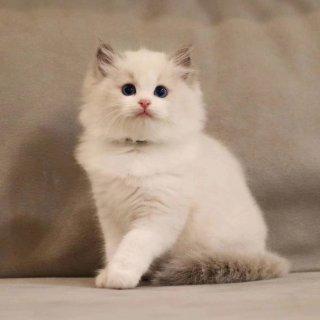 逐渐变成表情包的小猫咪🐾...
