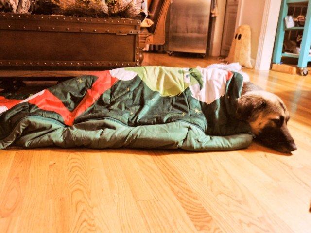你家🐶有睡袋吗