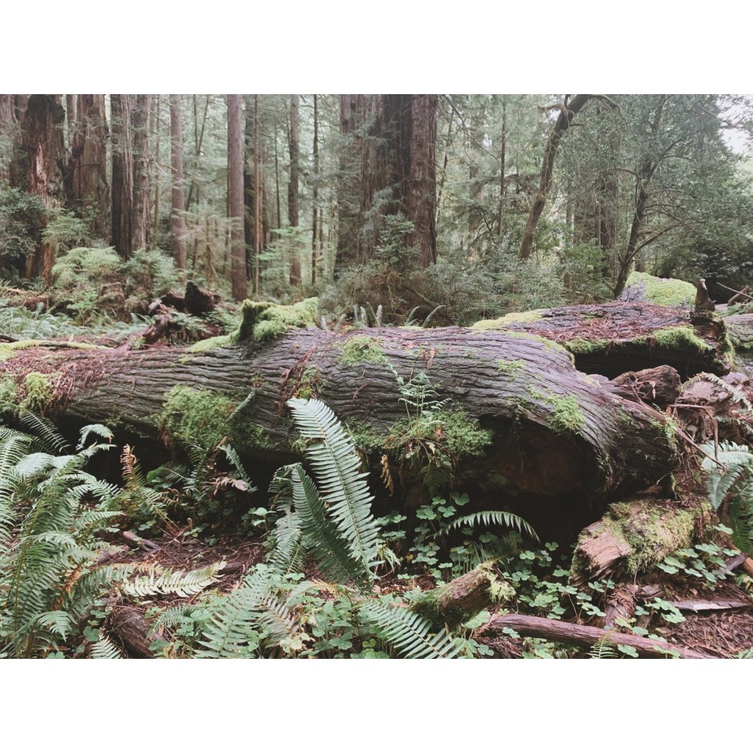 周末好去处   Redwood N...