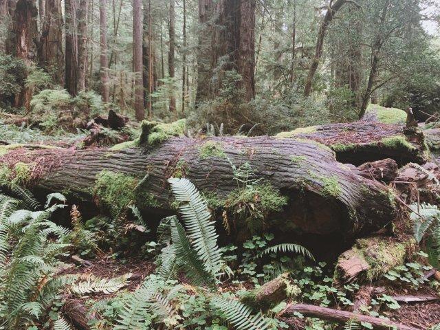 周末好去处 | Redwood N...