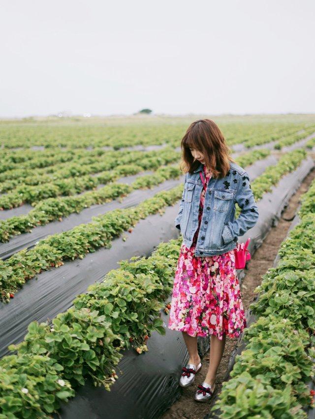 【今天是草莓女孩儿】