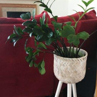 居家好养绿植| 你还在入假花假树吗?...