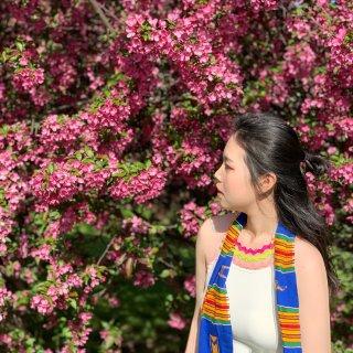 春日🌸拍花