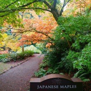 西雅图秋景 - 植物园...