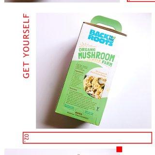 种花还不如种蘑菇!好吃又好玩的神奇蘑菇盒让你轻松在家当菇农