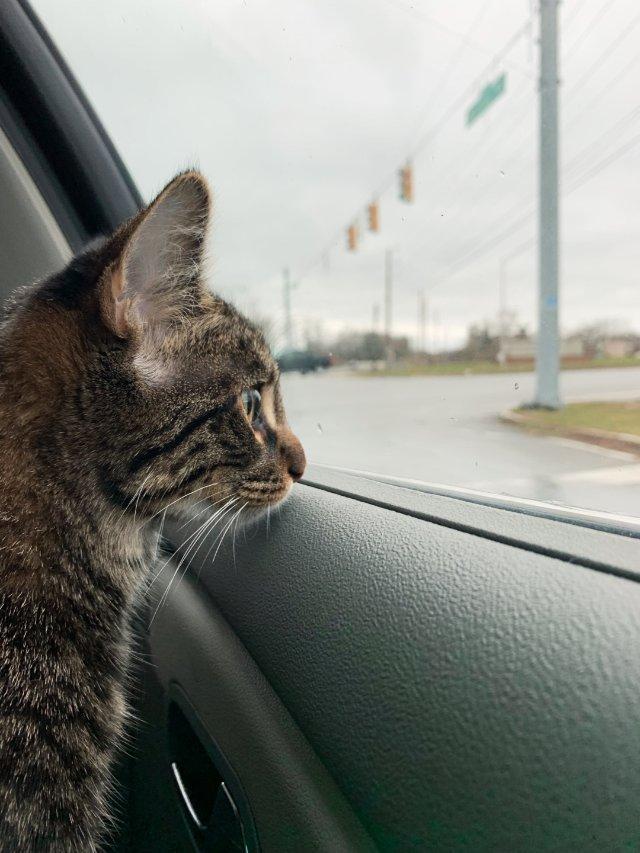 为猫咪的social操碎了心❤️