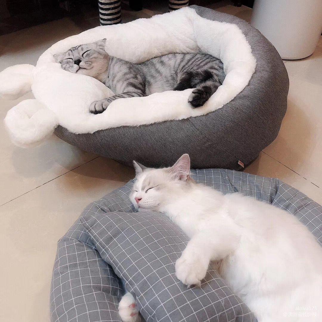 有猫撸的日子 无聊是不可能无聊的