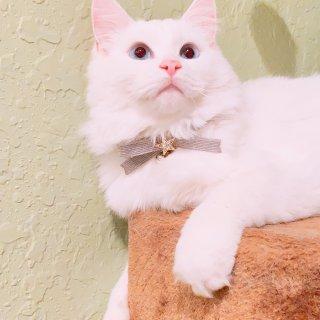 微众测~GGfly B款猫咪礼包✅
