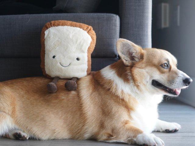 论面包成精的两种形态 Jellyc...