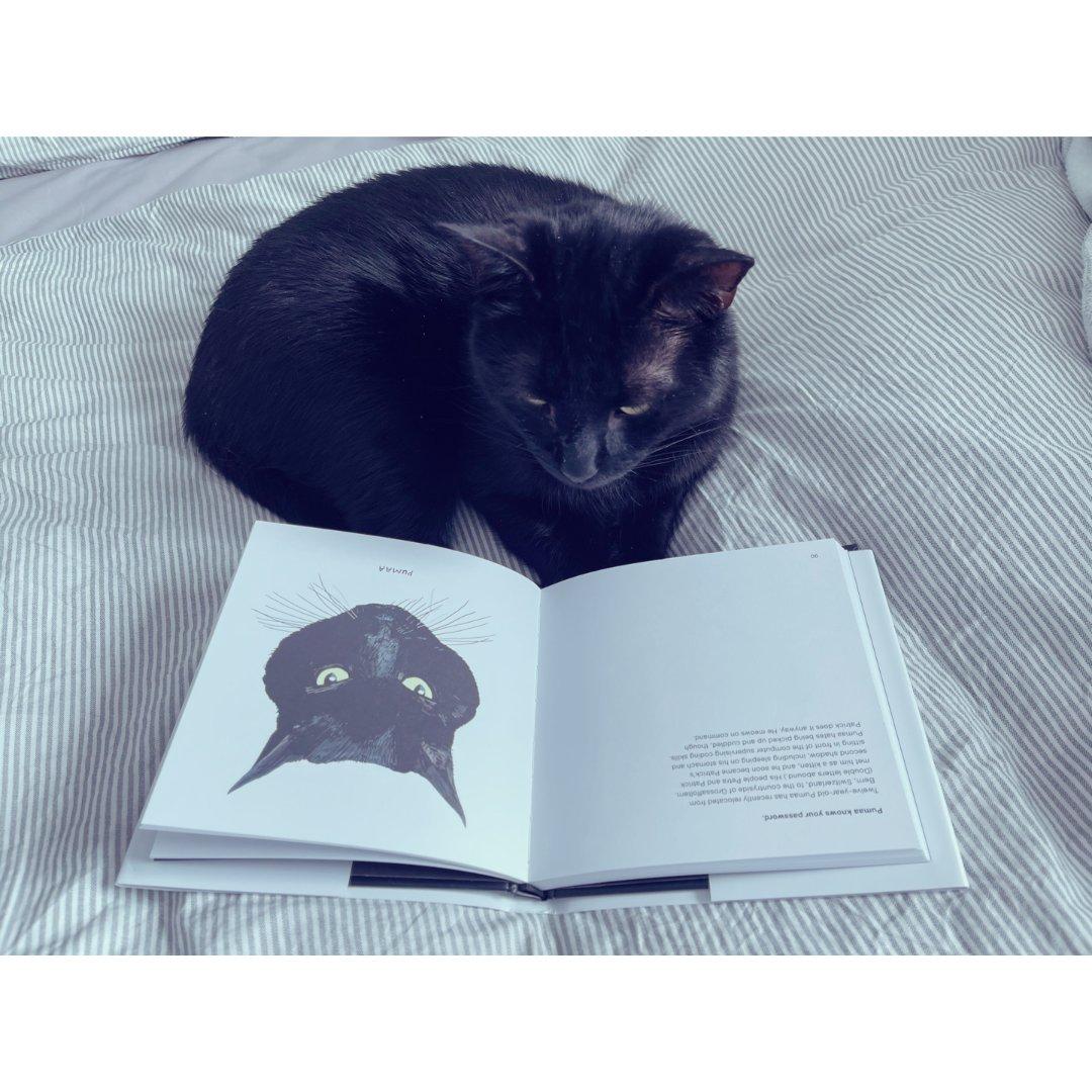 买了本书给猫咪🐈⬛让它没事照照镜子...