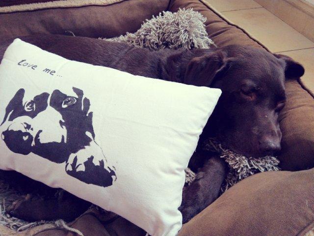 自己动手,拥有狗子定制周边抱枕|无...