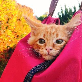 穿搭4|Longchamp饺子包💞...