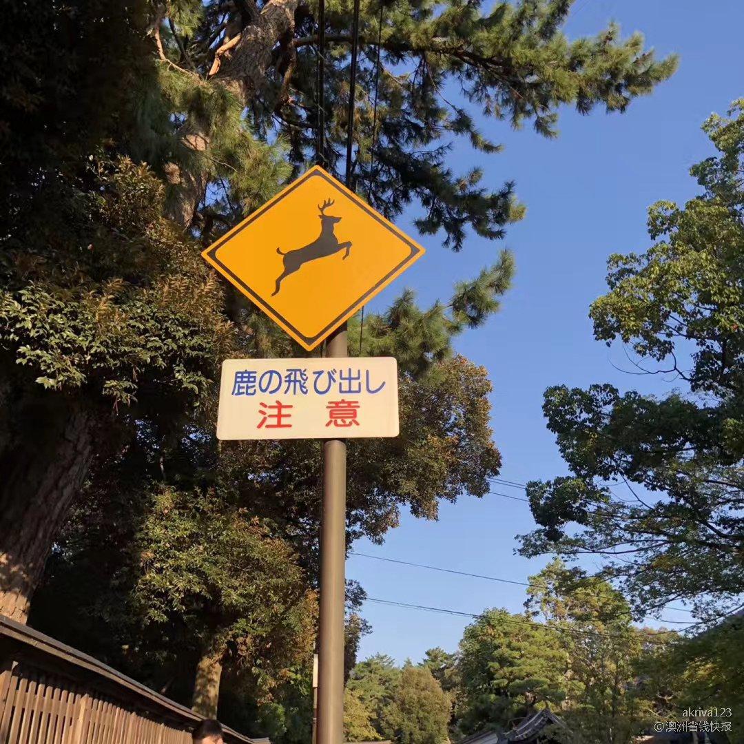 奈良公园🦌 打卡喂小鹿