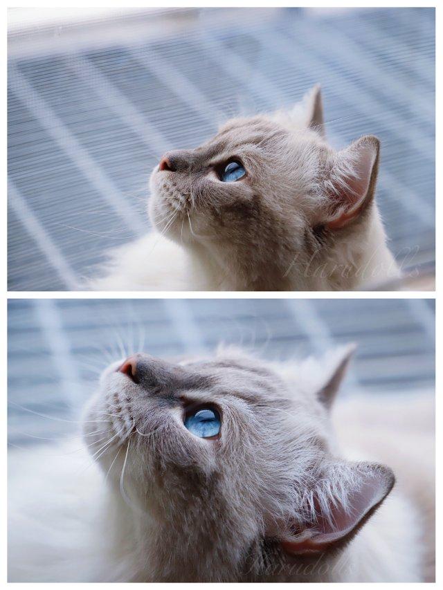 📷日常拍猫|你的眼里有着星辰大海🌌