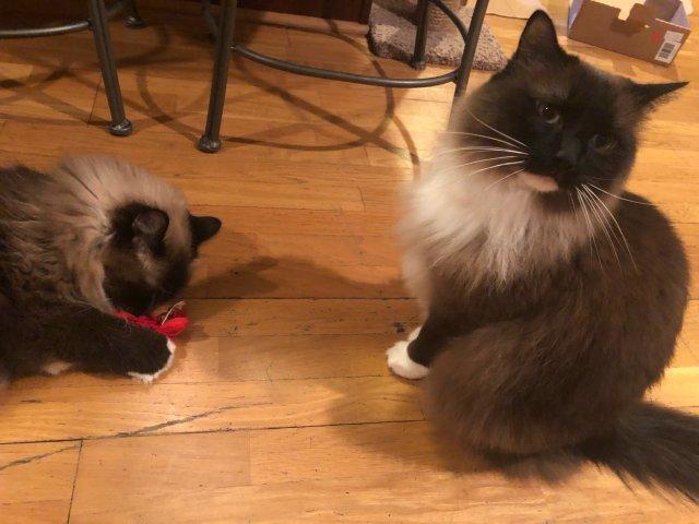 无法抵抗的cat nip