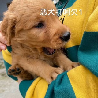 Puppy Love|和爱情同居了...