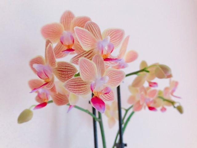 漂亮兰花,美化生活🤗