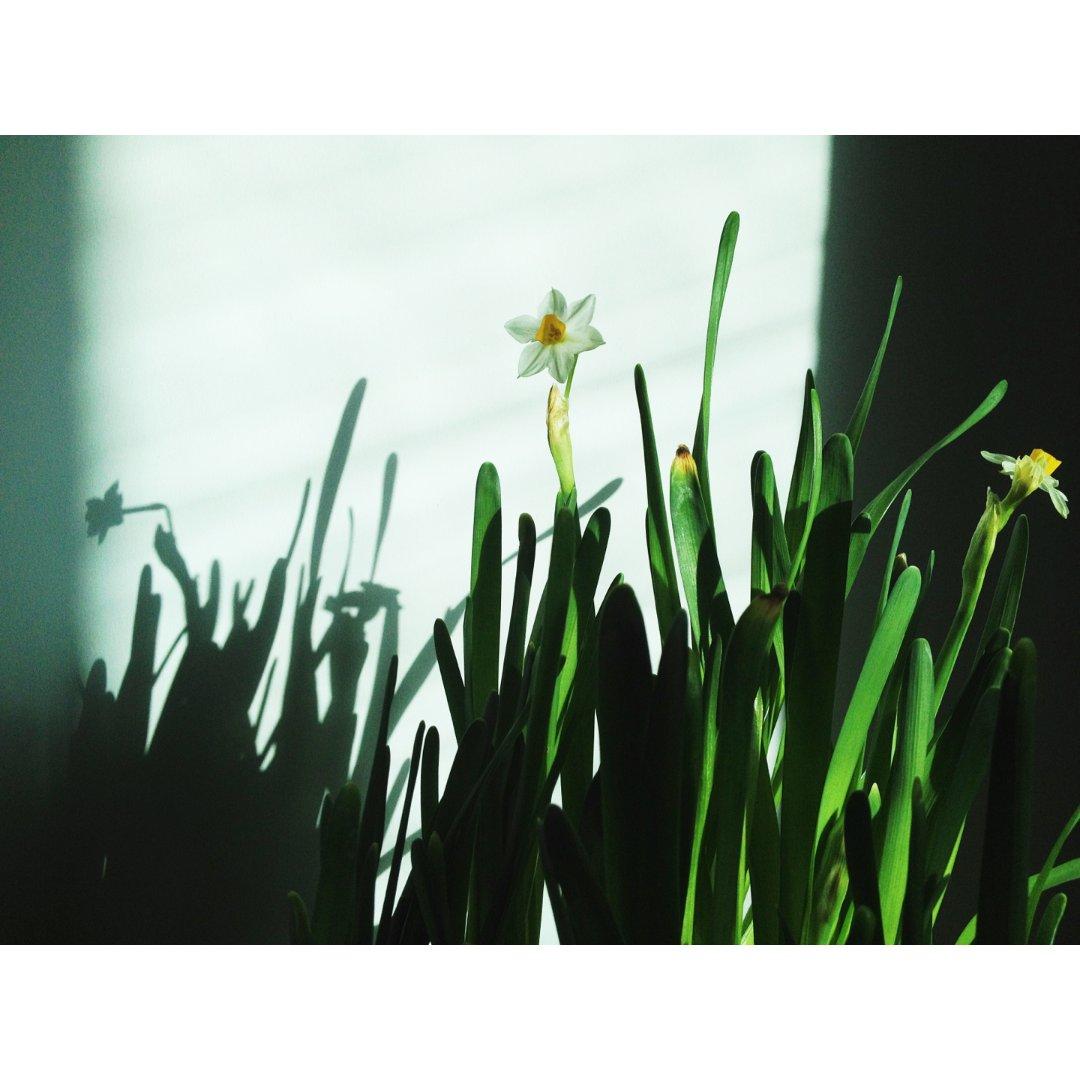 让生活幸福的花花草草