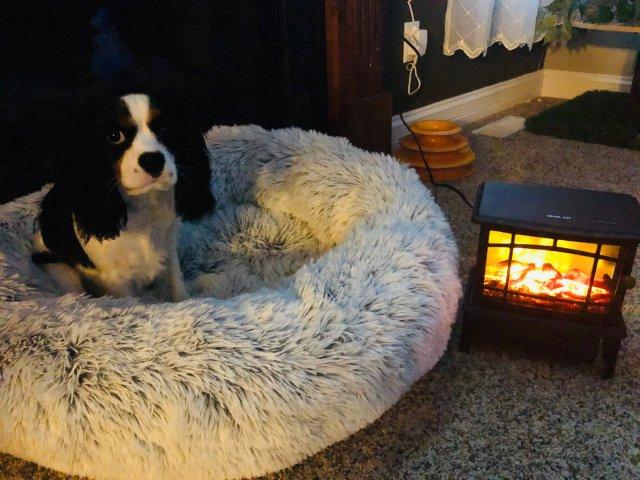 悠闲时光里的小暖炉