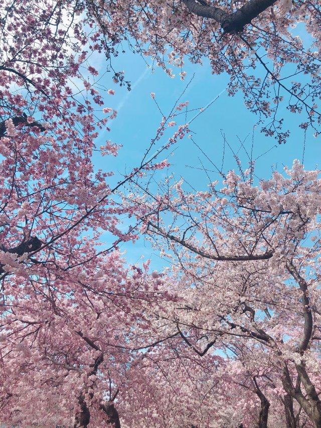 🌸三月的DC是粉色的呢🌸