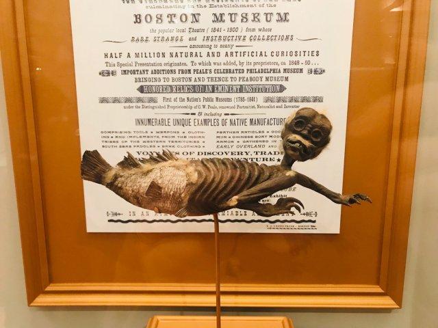 周日免费|哈佛自然历史博物馆🏛