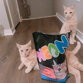 【微众测】用坠酷的猫砂,做坠🆒的猫咪🐱