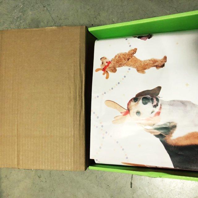 十一月份的barkbox狗狗礼盒。...