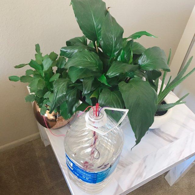 自制植物自动供水器