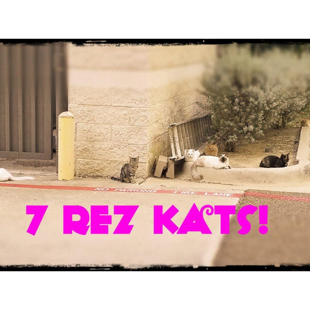7 rez cats!