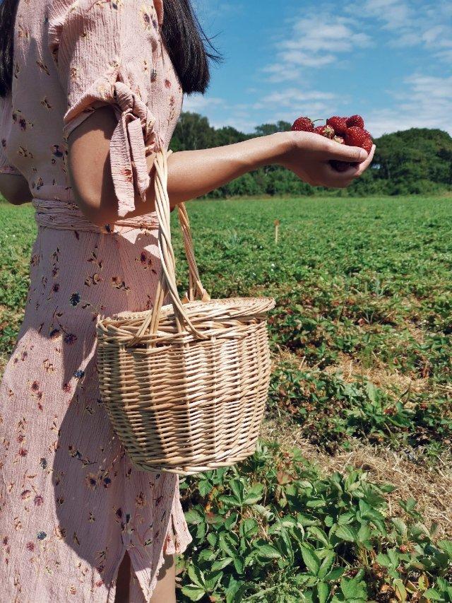 hi你的🍓熟了,不能错过的北欧草莓
