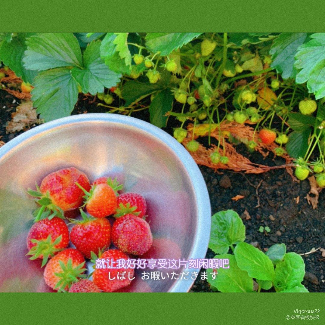 🍓新鲜小草莓🍓 - 后花园的小草莓终于熟...