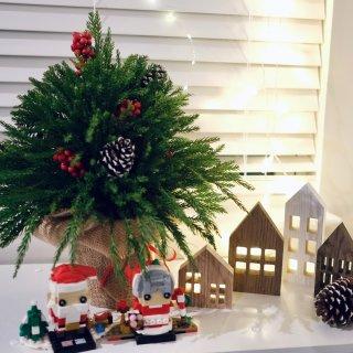 🎄第二颗迷你圣诞树...