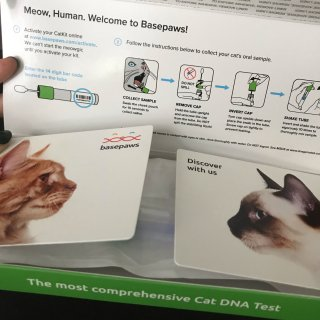 Basepaws Cat DNA Test Kit
