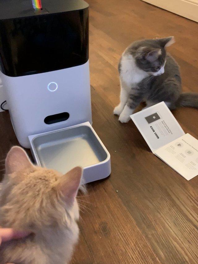 Petnet 自动喂食器 猫奴解放...