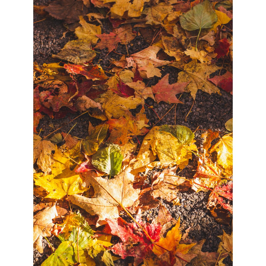 秋去冬来,最后一波秋叶叶落下了
