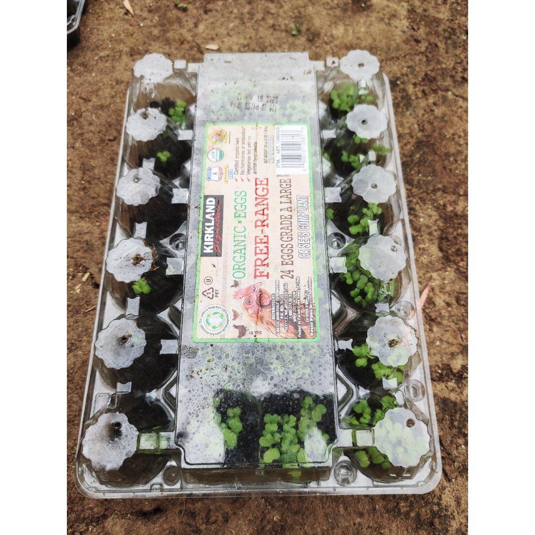 废物利用-用Costco鸡蛋盒打造...