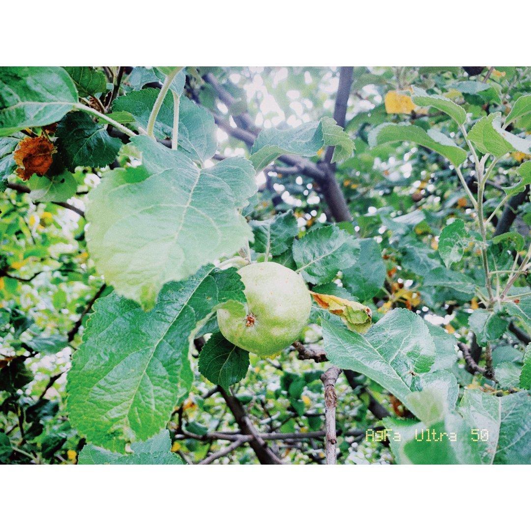 等待苹果成熟的下半年 😋