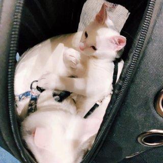 小猫咪在线撒猫粮 第一次见猫还让遛的🐱...