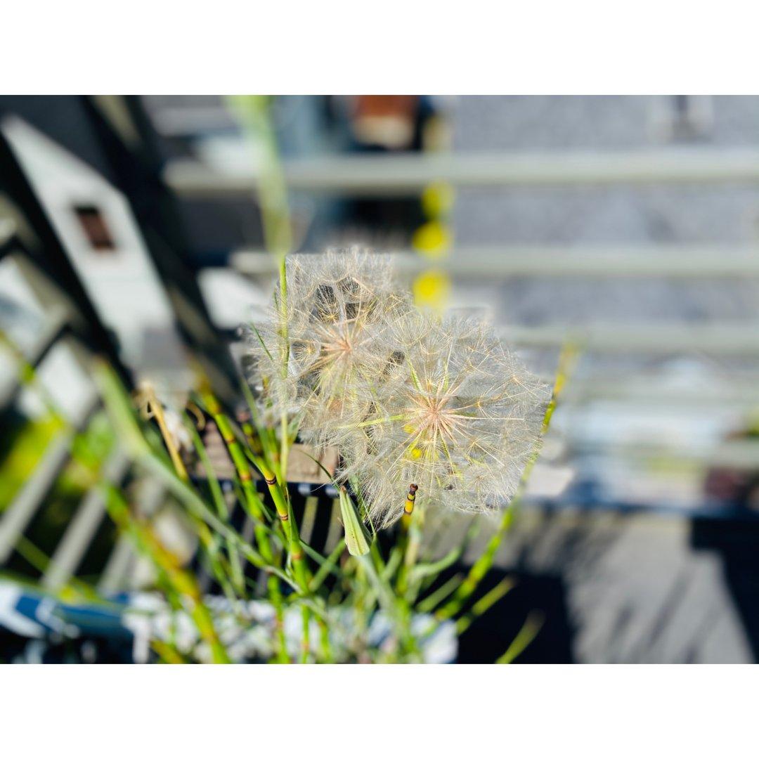 家居|心情好了杂草都长这么可爱